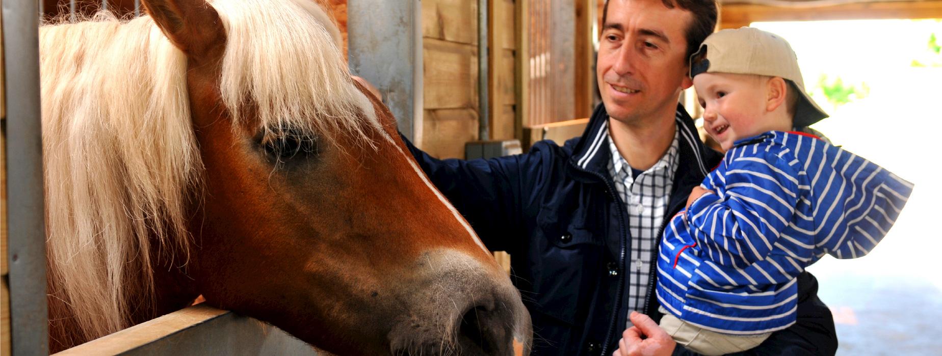 pony_a1